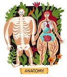 Human Anatomy Set royalty free illustration
