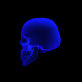 Human anatomy skull in xray. Human skull  3d illustrated rendering in x ray in left view Royalty Free Stock Photo