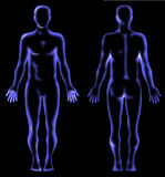 Human anatomy x-ray Royalty Free Stock Photography