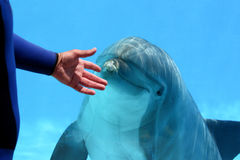 Human And Animal royalty free stock photos