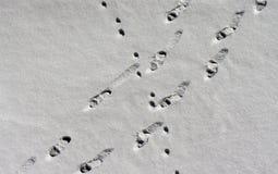 Footprints in snow Royalty Free Stock Photos