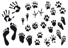 Human and animal imprints Royalty Free Stock Photo