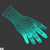 Human Arm. Human Hand Model. Hand Scanning. 3d Covering Skin.  Stock Photography