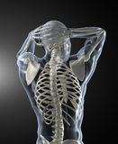 Human back Scan Royalty Free Stock Photos