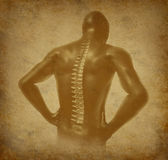 Human back spine spinal pain ancient grunge. Human back spine of spinal pain on ancient grunge old medical parchment Stock Photography