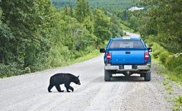 Human bear encounter royalty free stock image