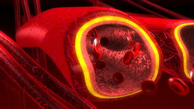 Human blood arteries and veins stock video footage