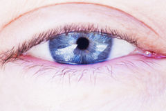 Human blue eye Royalty Free Stock Images
