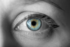 Human blue eye. royalty free stock photography