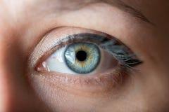 Human blue eye. Stock Images