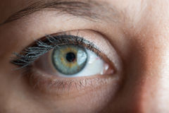Human blue eye. Stock Image
