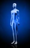 Human body royalty free stock photography
