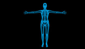 Human body Stock Image