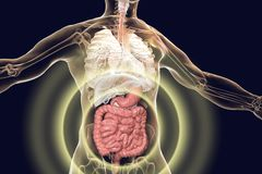 Human body anatomy with highlighted digestive system. 3D illustration royalty free illustration