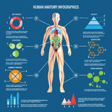 Human Body Anatomy Infographic Design. Colored Human Body Anatomy Infographic Design on Blue Green Background Royalty Free Stock Image