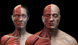Human body anatomy male and female Royalty Free Stock Photos