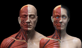Human body anatomy male and female Stock Photo