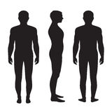 Human body anatomy, vector illustration