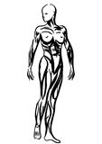 Human body anatomy woman illustration Royalty Free Stock Photo