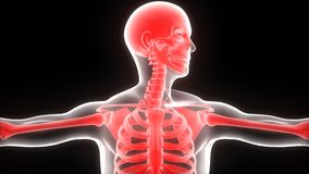 Human Body Bone Joint Pains Stock Image