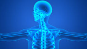 Human Body Bone Joint Pains Stock Photos