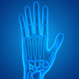 Human Body Bone Joint Pains (Finger Joints). 3D Illustration of Human Body Bone Joint Pains (Finger Joints Stock Photo