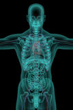 Human body with circulatory system Stock Photography