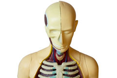 Human body (clipping path isolation) Stock Images