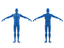 Human Body Royalty Free Stock Images