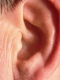 The human body. Ear. Pinna of adult man Royalty Free Stock Image