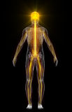 Human body with flashing neurons Royalty Free Stock Photos