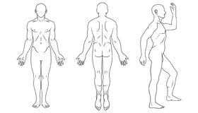Free Human Body Front, Back And Side Views Royalty Free Stock Images - 171889319