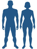 Human body. Illustration of the silhouette human body. Man and woman Vector Illustration