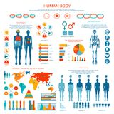 Concept of Human Body Colored Infographic Cartoon Royalty Free Stock Image