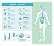 Human body infographics. Human body health care infographics, with medical icons, organs, charts, diagarms and copy space Royalty Free Stock Images
