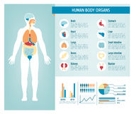 Human body infographics. Human body health care infographics, with medical icons, organs, charts, diagrams and copy space Stock Photo