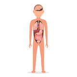 Human body with internal organs vector illustration