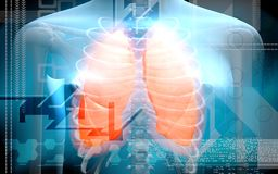Human body and lungs Royalty Free Stock Photo