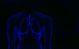 Human body and lungs Royalty Free Stock Photos