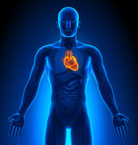 Medical Imaging - Male Organs - Heart Stock Photo