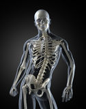 Human Body Medical Scan Royalty Free Stock Photo