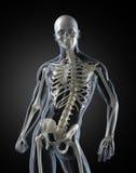 Human Body Medical Scan Royalty Free Stock Photo