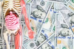 Human body model with skeleton and internal organs over us dollar money background. Transplantation concept. Expenses of. Treatment. Black market stock image