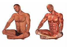 Human body and muscle system Royalty Free Stock Image