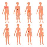 8 human body organ systems realistic educative anatomy physiology front back view flashcards poster vector illustration. Vector illustration of location of 8 vector illustration
