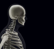 The human body (organs) by X-rays on black background Stock Photos