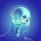 The human body (organs) by X-rays on blue background Royalty Free Stock Photos