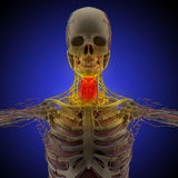 The human body (organs) by X-rays on blue background Stock Image