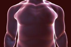 Human body silhouette, illustration Stock Photos