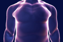 Human body silhouette, illustration Stock Images